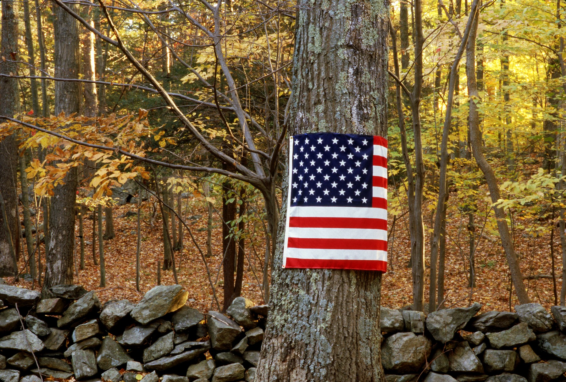 Tribute to the Fallen | Tree